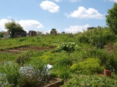 The allotment in the sunshine